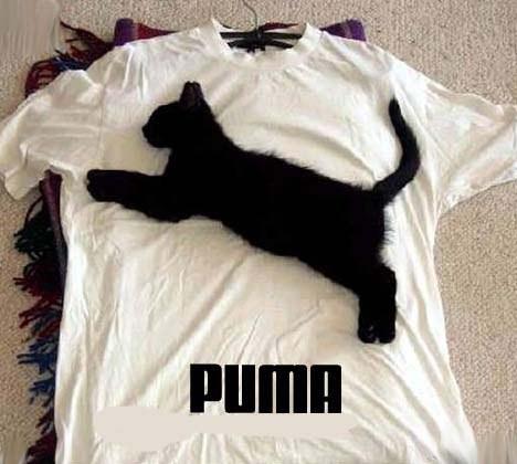 dans fond ecran drole Puma